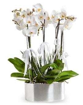 Beş dallı metal saksıda beyaz orkide  Elazığ hediye sevgilime hediye çiçek