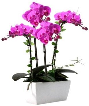 Seramik vazo içerisinde 4 dallı mor orkide  Elazığ çiçek mağazası , çiçekçi adresleri