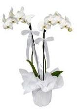 2 dallı beyaz orkide  Elazığ online çiçek gönderme sipariş