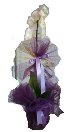 Tek dallı beyaz orkide süper kalite ithal  Elazığ çiçek yolla , çiçek gönder , çiçekçi