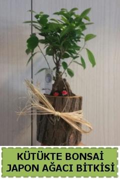 Kütük içerisinde doğal bonsai ağacı  Elazığ çiçek servisi , çiçekçi adresleri