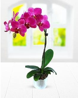 Tek dallı mor orkide  Elazığ çiçek mağazası , çiçekçi adresleri