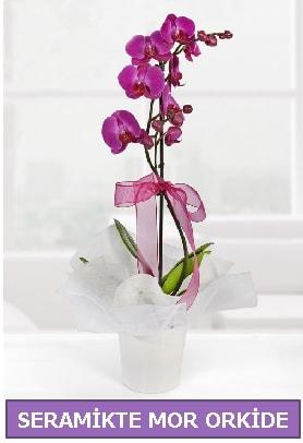 Seramik içerisinde birinci kalite tek dallı mor orkide  Elazığ 14 şubat sevgililer günü çiçek