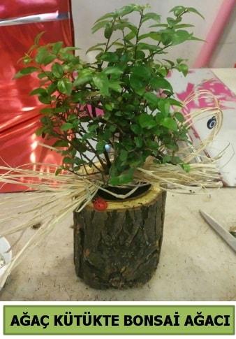 Doğal ağaç kütük içerisinde bonsai ağacı  Elazığ anneler günü çiçek yolla