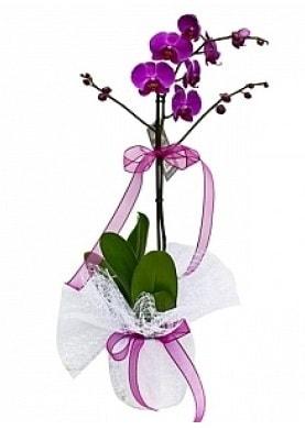 Tekli Mor Orkide  Elazığ hediye sevgilime hediye çiçek