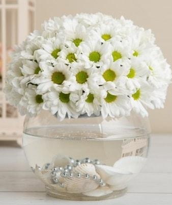 Fanusta beyaz Papatya  Elazığ çiçek mağazası , çiçekçi adresleri