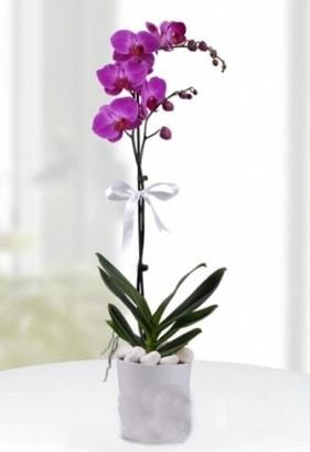 Tek dallı saksıda mor orkide çiçeği  Elazığ çiçek gönderme sitemiz güvenlidir