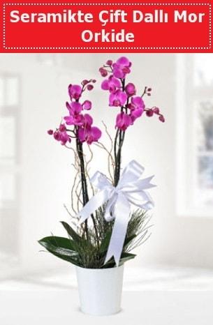 Seramikte Çift Dallı Mor Orkide  Elazığ çiçekçi mağazası